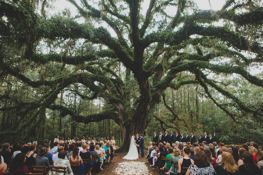 A wedding ceremony in front of a large tree with leaves covering it.