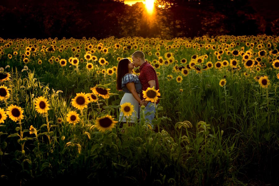sunflowers engagement session